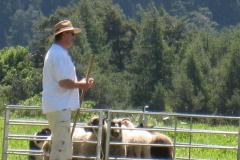 chiens 12.07.2008 012