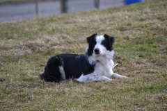 chiens-2b-divers-04.03.2014-056