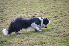 chiens-2b-divers-04.03.2014-060